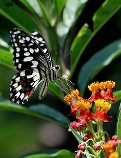 MeWe is the Next-Gen Social Network. Butterfly Photos, Butterfly Kisses, Butterfly Wings, Most Beautiful Butterfly, Flying Flowers, Moth Caterpillar, A Bug's Life, Insect Art, Mundo Animal