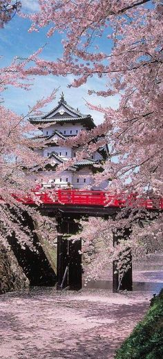 Stroll through the cherry blossom at Hirosaki Castle, Aomori, Japan Aomori, Beautiful World, Beautiful Places, Amazing Places, Places To Travel, Places To Visit, Travel Destinations, Japanese Castle, Japanese Palace