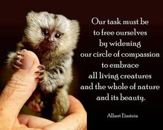 Our task must be to free ourselves by widening our circle of compassion. Only then can we ever have world peace.