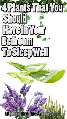 4 Plants That You Should Have In Your Bedroom To Sleep Well