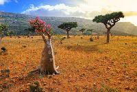 The Lost Island of #Socotra , #Yemen
