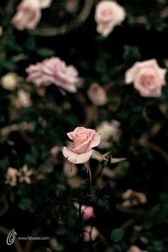 Beauty Stands in Many by fahadee, via Flickr