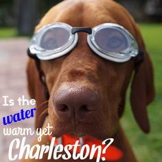 Is the water warm in Charleston yet?