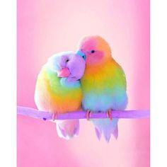 Rainbow aesthetic pretty animals, pretty birds, pretty in pink, cute chibi, love Cute Birds, Pretty Birds, Beautiful Birds, Animals Beautiful, Pretty Animals, Birds Pics, Animals Amazing, Baby Animals Super Cute, Cute Little Animals