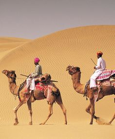Guide to Going on a Camel Safari in India