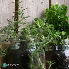 Herb Planter Ideas (How to Choose the Right Pot & How to Grow Herb in Pots), - Kräutergarten Ideen Outside Planters, Large Outdoor Planters, Herb Planters, Planter Ideas, Herb Pots, Herb Garden Kit, Herb Garden In Kitchen, Herb Garden Design, Garden Ideas