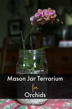 Mason Jar Terrarium for Miniature Orchids | A Life in Balance