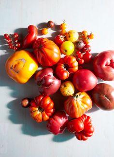 Tomatoes. Gentl + Hyers for Bon Appétit.