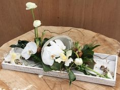 Vlindertuin - Vlinders | Tropische: tuin, planten, vissen | Phalaenopsis