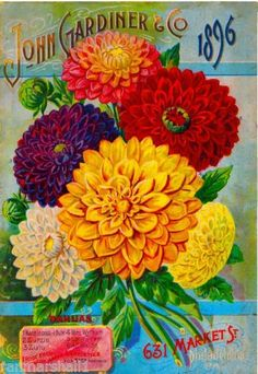 1896-John-Gardiner-Dahlias-Vintage-Flowers-Seed-Packet-Advertisement-Art-Poster