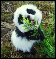 Top 10 Cutest Baby Panda Videos Uncomplicated Tutorials Images Of Cute Pandas Cute Little Animals, Cute Funny Animals, Adorable Baby Animals, Plush Animals, Animals And Pets, Animals Photos, Wild Animals, Cut Animals, Jungle Animals