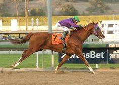 140.  2014.  California Chrome.  Kentucky Derby & Preakness.  Man O' War and Secretariat lineage.
