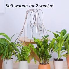 We're rooting for these 12 clever plant hacks! – Pam Connell We're rooting for these 12 clever plant hacks! We're rooting for these 12 clever plant hacks! Simple Life Hacks, Useful Life Hacks, Container Gardening, Gardening Tips, Hydroponic Gardening, Gardening Services, Indoor Gardening, Outdoor Gardens, Diy Home Crafts