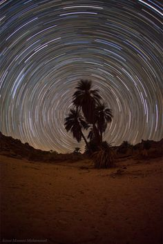 A long exposure photo with the camera directed to north sky. The circumpolar stars appear between the palms. The sky was dark and clear because of long distance to any city.