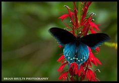 Brian Shults Photography.com - Nature Gallery - Bugs and Butterflies