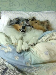 SOMEone has doggeh breath. Wait- we BOTH do.