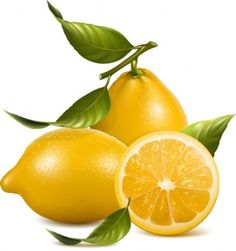 fruit vector - Google Search