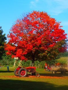 Fall Foliage 2014: Check out your beautiful nature photos from around Upstate New York | syracuse.com
