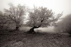 Urbasa by Eladio Aires, via 500px