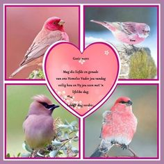 Morning Inspirational Quotes, Good Morning Quotes, Rumi Love, Afrikaanse Quotes, Goeie Nag, Goeie More, Beautiful Birds, Wisdom Quotes, Christmas Decorations