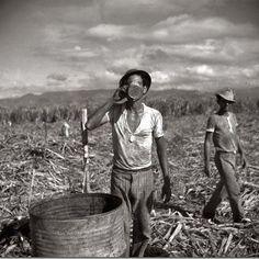 Trabajadores del campo en una plantación de caña de azúcar cerca de Ponce, Puerto Rico... Via Somos Puerto Rico