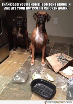 A+photo+of+two+dogs+and+food+boxes+all+over+the+floor.+Someone+broke+in+and+ate+your+chicken+again.+Funny+animal+picture+with+captions.