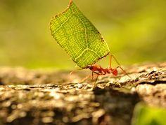 Les fourmis ont la désagréable habitude de se déplacer en nombre et il n'est pas toujours facile de chasser ces petits insectes qui colonisent en un rien de temps votre jardin ou votre potager. Si vous ne souhaitez pas utiliser les produits chimiques vendus dans le commerce, sachez qu'il existe de nombreuses solutions répulsives naturelles pour les faire fuir.