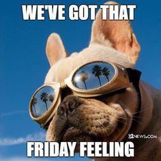Cute puppy is ready for some Friday Fun Adventures with some friends or maybe go to a party! #dogs #funny #tgif #tgifridays #mood Happy Friday Humour, Happy Friday Quotes, Funny Friday Memes, Happy Quotes, Happy Friday Pictures, Friday Wishes, Friday Funnies, Thursday Humor, Monday Humor