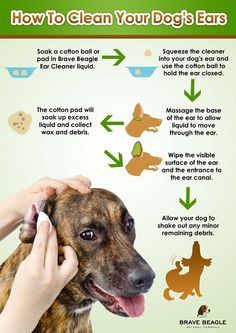 Dog Ear Cleaner By Brave Beagle! Help Prevent Infection, Itching and Mites with our All-Natural, Gentle Cleanser