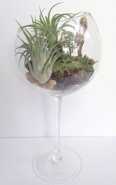 DIY Moss Terrarium Kit Airplant Terrarium Wine by PiccolaPianta