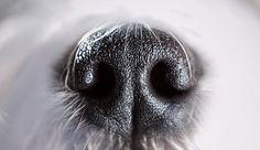 Droog voer voor honden | Het vlees – een bron van belangrijke aminozuren – vormt de basis van het dagelijkse eten van de hond, zijn behoeftes en gezondheid.