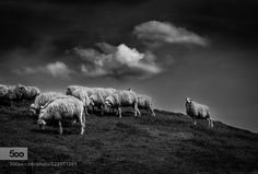 Wool Cloud by dgt #nature