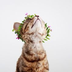 flower crown cat for princess stripes
