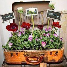 Planten in oude koffer