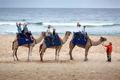 Beach Camel Rides - Events