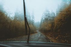 Driving around Mt. Hood in the storm with Sam yesterday  For prints contact me: forrestmankins@gmail.com