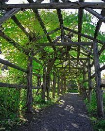 Arbor/trellis