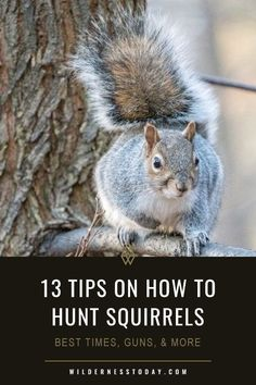 How to Hunt Squirrel: 13 Hunting Tips (Best Times, Guns, & More) - Do you want to learn how to hunt squirrel? Finding squirrels like the red squirrel, western gray sq - Deer Hunting Humor, Squirrel Hunting, Deer Hunting Blinds, Hunting Tips, Red Squirrel, Ground Squirrel, Rabbit Hunting, Hunting Stuff, Coyote Hunting