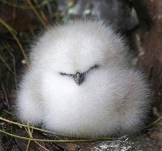 モフモフの鳥