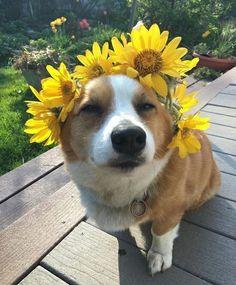 aesthetic, dog, flower
