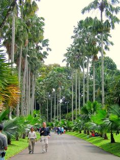 The Botanical gardens    The world renowned Bogor Botanical Gardens (Indonesian: Kebun Raya) are situated in the city center of Bogor and adjoin the Istana Bogor (Presidential Palace). The gardens cover more than 80 hectares and was built by Java's Dutch Governor-General Gustaaf Willem, Baron van Imhoff who was governor of Java at the time. Beautiful World, Beautiful Places, Dutch East Indies, Dutch Colonial, Colonial Architecture, Bogor, Tropical Garden, Greenhouses, Jakarta