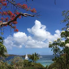 Looking out from the Turtle Bay Estate House #stjohn #usvi #vacation #island #caribbean