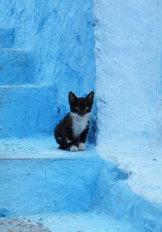 Chefchaouen. Little kitten on blue steps by Sallyrango, via Flickr    #animal #cat #blue
