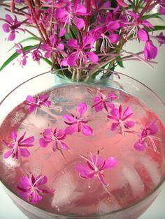 horsmamehu tai horsmajuoma. villinä kasvavasta rentun ruususta valmistettua horsmankukkamehua.
