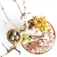 Follow this step-by-step tutorial to make a gorgeous succulent Fairy Garden.
