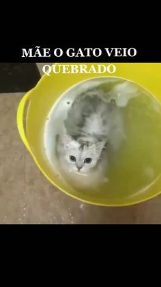 Funny Animal Memes, Funny Animal Videos, Cute Funny Animals, Cute Baby Animals, Funny Cute, Animals And Pets, Cute Cats, Cool Cat Toys, Cool Pets