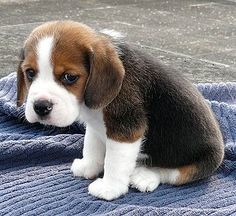 Aww, sad puppy!