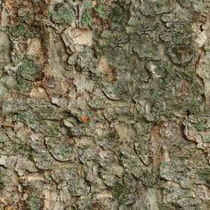 Zero CC bark from fur tree tileable texture, photographed and made by me. CC0