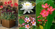 26 Flowers That Bloom All Year Round   Permanent Flowering Plants Rare Flowers, Amazing Flowers, Pretty Flowers, Yellow Flowers, Bonsai Garden, Garden Plants, Flowers Perennials, Planting Flowers, Year Round Flowers