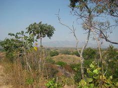 La Guamita. Cojedes-Venezuela